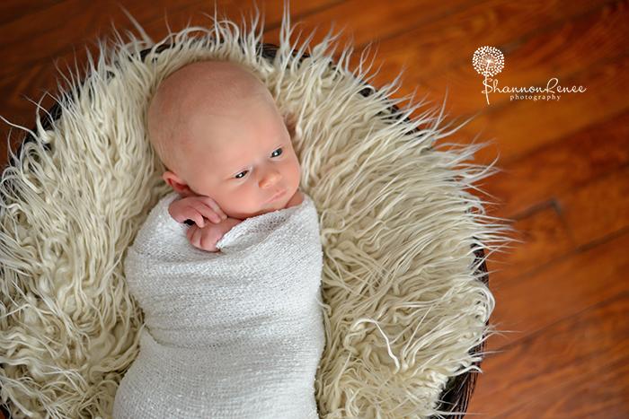 tampa newborn photographer 2