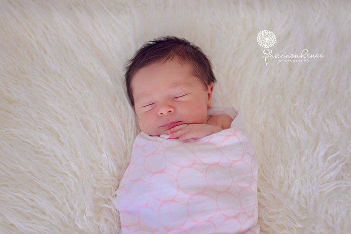 south tampa newborn photographer 13