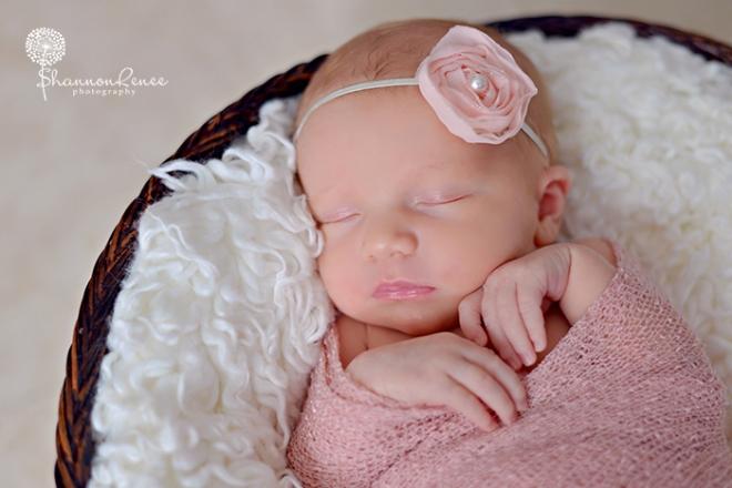 south tampa newborn photographer 4